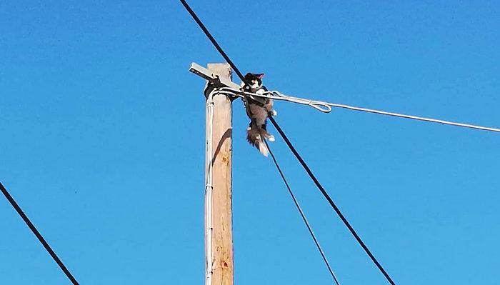Καρέ καρέ η διάσωση της άτακτης γάτας στην Αργολίδα