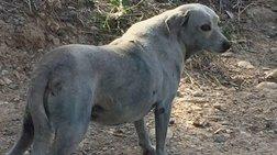 Ανίκητη η ανθρώπινη βλακεία: Εβαψαν σκυλίτσα με μπλε μπογιά