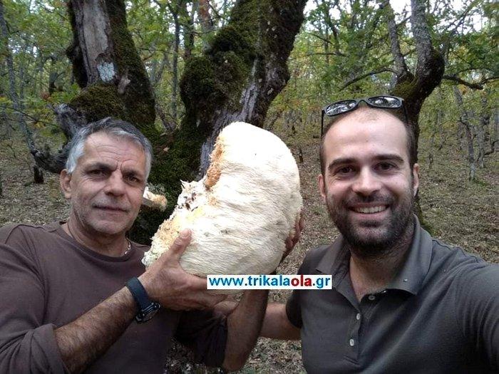 Βρήκαν μανιτάρι γίγας 5,5 κιλών στα Τρίκαλα