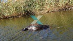 Κτηνωδία στον Έβρο: Νεκρά πέντε άλογα στο ποτάμι