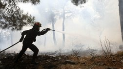 Πάνω από πεντακόσια στρέμματα κατέκαψε φωτιά στο Κιλκίς