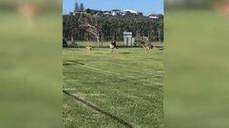 «Συμμορία» άτακτων καγκουρό διακόπτει ποδοσφαιρικό αγώνα (βίντεο)
