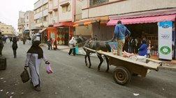 bretanos-pethane-apo-lussa-afou-ton-dagkwse-mia-gata-sto-maroko