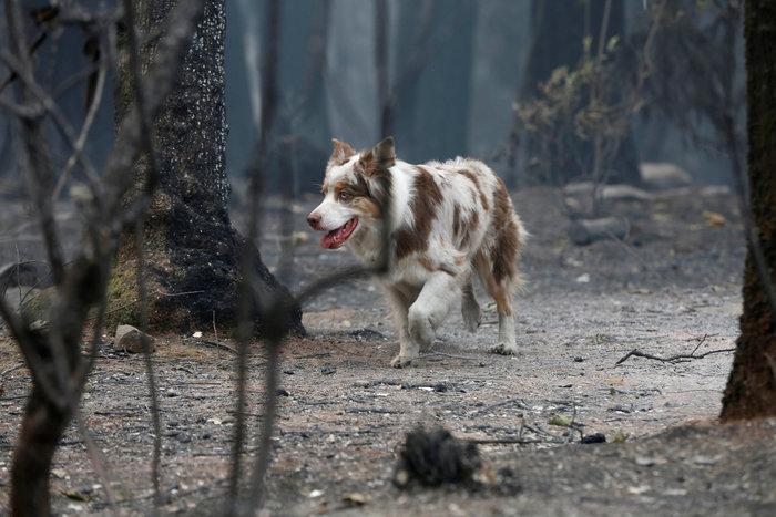 56 νεκροί και 100 αγνοούμενοι από την κόλαση φωτιάς στην Καλιφόρνια - εικόνα 2