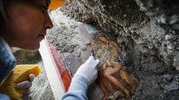Η Λήδα και ο Κύκνος σε μια μοναδική τοιχογραφία της Πομπηίας