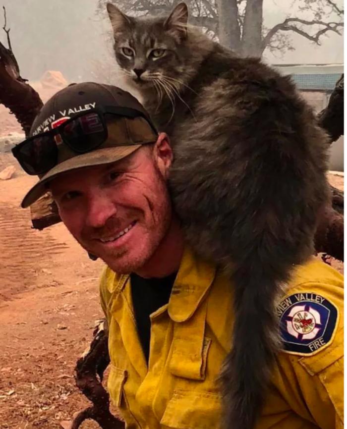 Καλιφόρνια: Πυροσβέστης έσωσε γάτα από τις φλόγες - Η υπέροχη αντίδρασή της