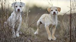 Αλλη μια κτηνωδία στην Κρήτη: Κρέμασαν σκύλο από γέφυρα