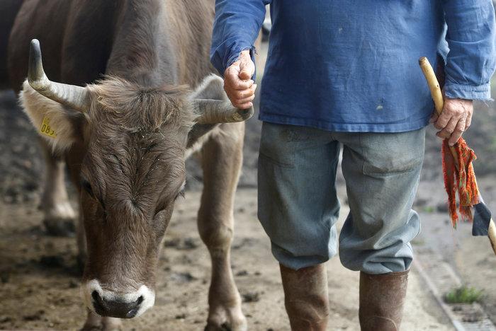 """Ελβετία: Οι πολίτες είπαν """"όχι"""" στις """"αγελάδες με κέρατα"""" - εικόνα 2"""