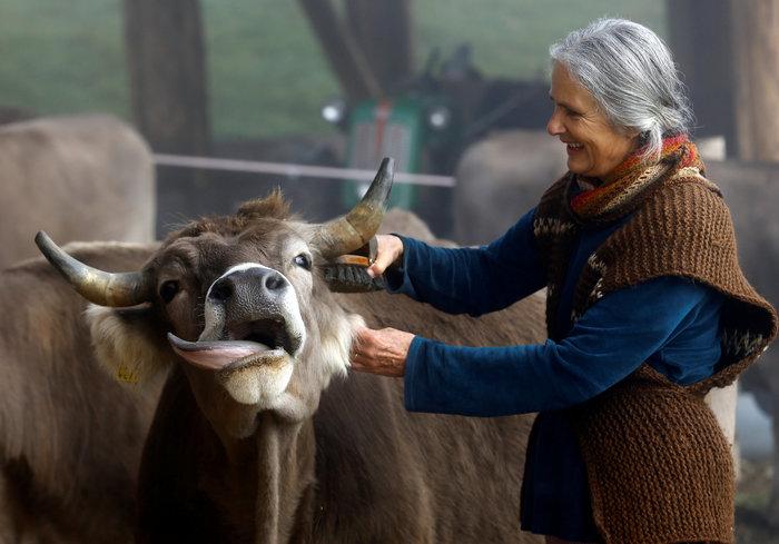 """Ελβετία: Οι πολίτες είπαν """"όχι"""" στις """"αγελάδες με κέρατα"""" - εικόνα 4"""
