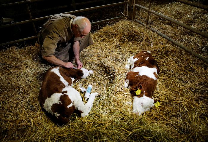 """Ελβετία: Οι πολίτες είπαν """"όχι"""" στις """"αγελάδες με κέρατα"""" - εικόνα 6"""