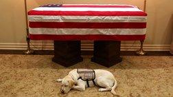 Η συγκινητική φωτογραφία της Σάλι, του σκύλου του Μπους
