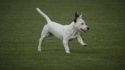 Δύο χρόνια φυλακή και πρόστιμο σε άντρα που σκότωσε αδέσποτο σκυλί