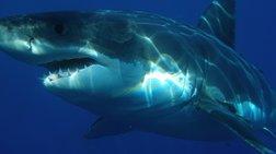 Αυστραλία: Καρχαρίας επιτέθηκε και τραυμάτισε σοβαρά 36χρονο σέρφερ