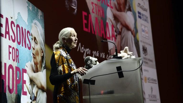 Η γυναίκα που άλλαξε όσα ξέραμε για τον «συγγενή» χιμπατζή