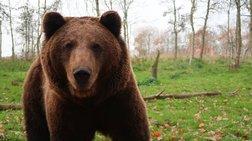 Η σκληρή εκδίκηση της αρκούδας στη Ρωσία