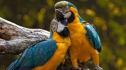 ta-athinaika-parka-gemisan-me-papagalous--asunithisto-fainomeno