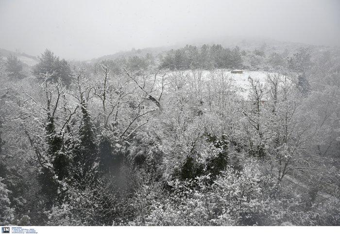 Στα λευκά η χώρα από τη «Σοφία» -Πτώση θερμοκρασίας & παγετός - εικόνα 6