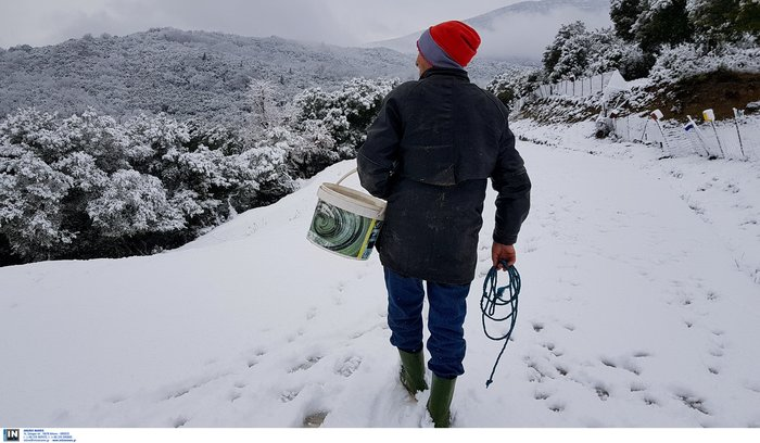 Στα λευκά η χώρα από τη «Σοφία» -Πτώση θερμοκρασίας & παγετός - εικόνα 2