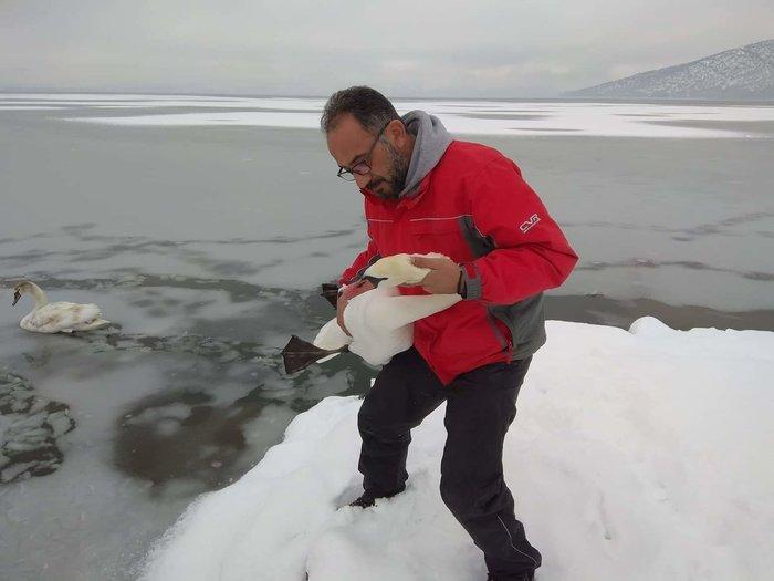 Σώζουν εγκλωβισμένα πουλιά στην παγωμένη λίμνη της Καστοριάς