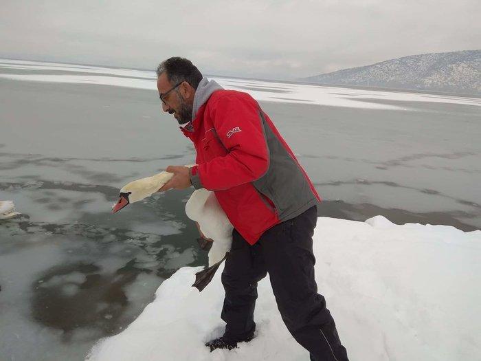 Σώζουν εγκλωβισμένα πουλιά στην παγωμένη λίμνη της Καστοριάς - εικόνα 2