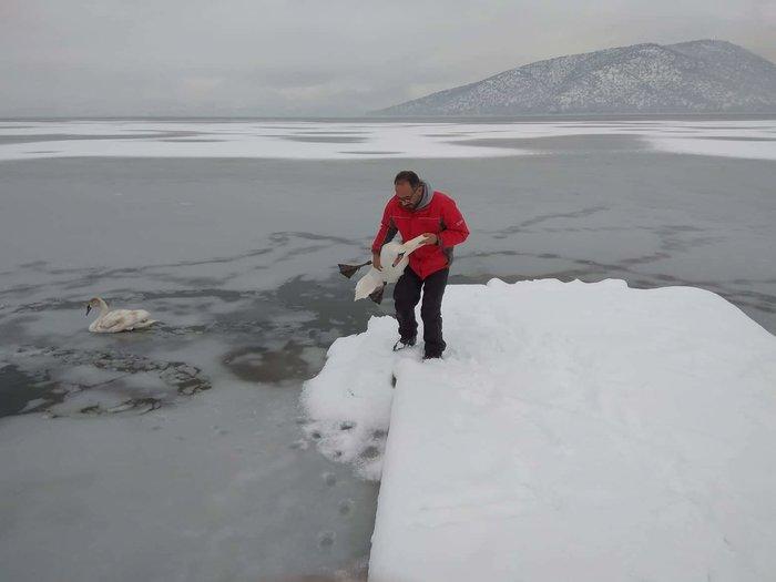 Σώζουν εγκλωβισμένα πουλιά στην παγωμένη λίμνη της Καστοριάς - εικόνα 3