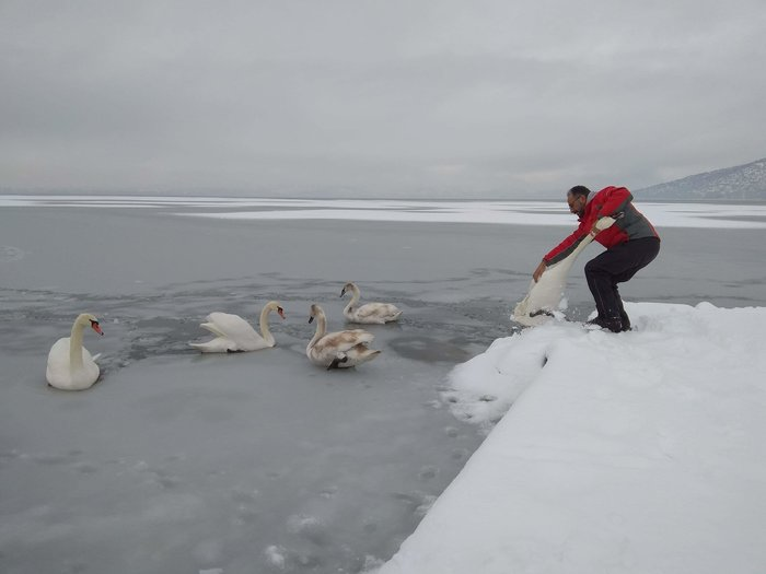 Σώζουν εγκλωβισμένα πουλιά στην παγωμένη λίμνη της Καστοριάς - εικόνα 4
