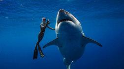 Δύτες κολύμπησαν πλάι σε λευκό καρχαρία 6 μέτρων -καθηλωτικά πλάνα