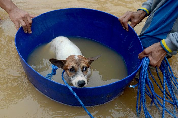 Ινδονησία: Στους 59 οι νεκροί από πλημμύρες και κατολισθήσεις (φωτό) - εικόνα 2