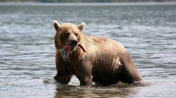 ΗΠΑ: Τρίχρονο χάθηκε σε δάσος για μέρες - Σώθηκε... λέει, από αρκούδα