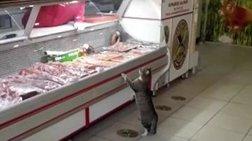 Κρεοπώλης κατασκεύασε τάφο για την πιο τακτική πελάτισσά του, τη γάτα Γεσίμ