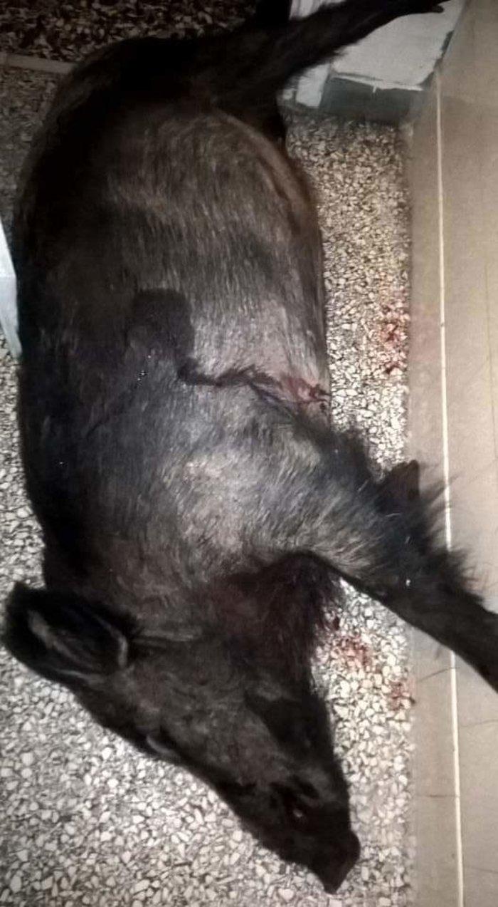 Δολοφονία Σταματιάδη: «Αγγίζουν» τους άλλους δύο δράστες - εικόνα 2