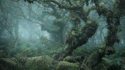 «Mystical»: Οι εντυπωσιακές φωτογραφίες του Νιλ Μπαρνέλ