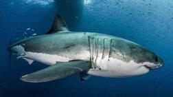 Aποκωδικοποίησαν το DNA του μεγάλου λευκού καρχαρία