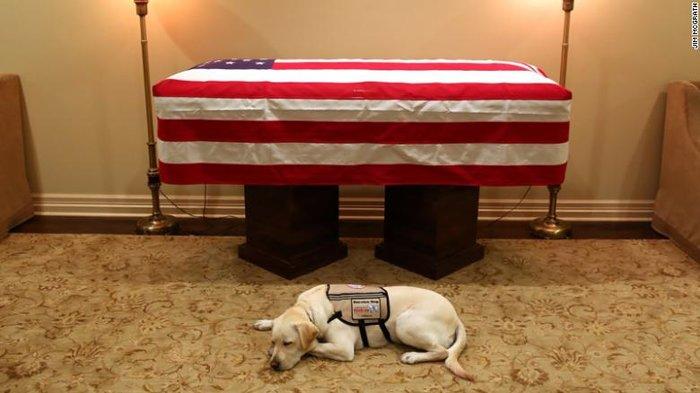 Ο σκύλος-βοηθός του Τζορτζ Μπους που συγκίνησε απέκτησε νέα δουλειά