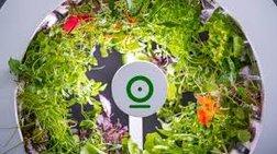 OGarden Smart: Ο λαχανόκηπος μετακόμισε στην κουζίνα