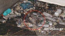 Διέσωσαν παγιδευμένο λύκο στο Πλατύ Ημαθίας [φωτό & βίντεο]
