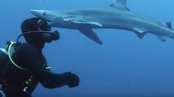 Το τετ α τετ του δύτη με τον καρχαρία κατέληξε σε... φιλί (βίντεο)