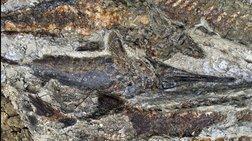 Για πρώτη φορά στο φως απολιθώματα ζώων από την ημέρα της «Αποκάλυψης»