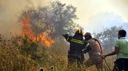 Ηλεία: Μεγάλη φωτιά στο προστατευόμενο Δάσος της Στροφυλιάς