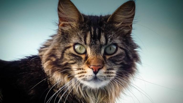 adventure-cats-gates-travel-bloggers