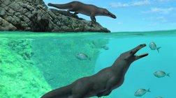 Τετράποδη φάλαινα περπατούσε & κολυμπούσε πριν από 42,6 εκατ. χρόνια