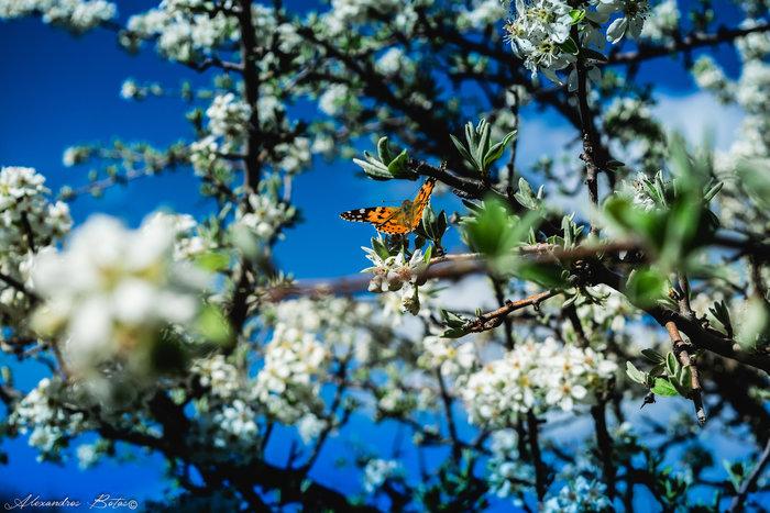 Η ελληνική φύση την άνοιξη μέσα από 20 μοναδικές εικόνες - εικόνα 2