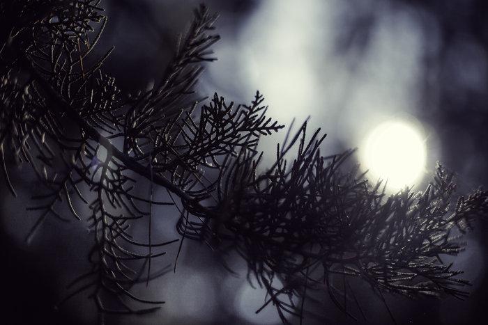 Η ελληνική φύση την άνοιξη μέσα από 20 μοναδικές εικόνες - εικόνα 5