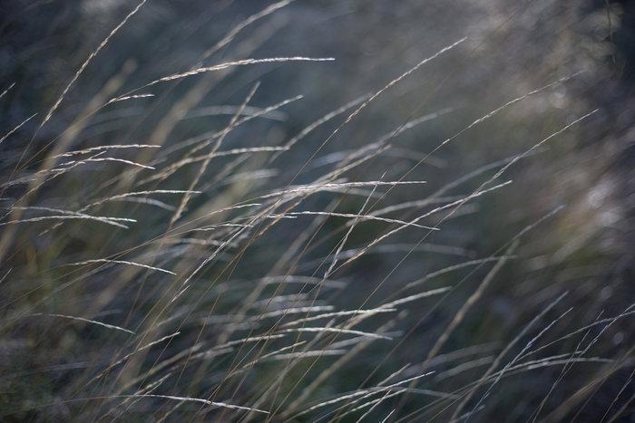 Η ελληνική φύση την άνοιξη μέσα από 20 μοναδικές εικόνες - εικόνα 9