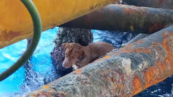 H διάσωση σκύλου που κολυμπούσε 220 χλμ μακριά από την ακτή
