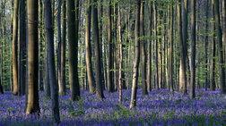 Το «μπλε δάσος» του Βελγίου