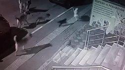Γάτα τα βάζει και νικά αγέλη αδέσποτων σκύλων στην Τουρκία [βίντεο]