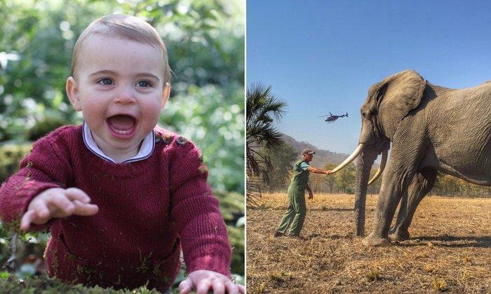 Πρίγκιπας Λουις και ρινόκερος