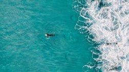Η πιο ολοκληρωμένη «απογραφή»  ιών της θάλασσας βρήκε 200.000 είδη