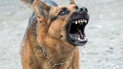 """Ληστεία στο Μενίδι με """"όπλο"""" έναν σκύλο"""